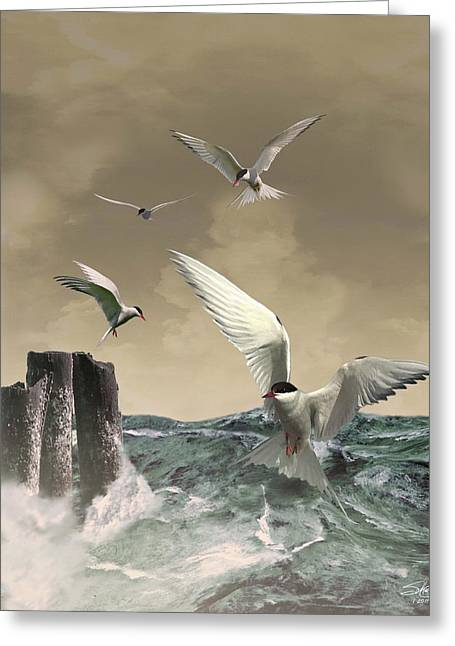 Tern Digital Art Greeting Cards - Terns in the Wind Greeting Card by IM Spadecaller