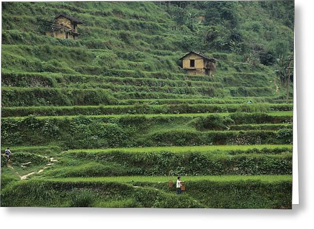 Rural Ways Of Life Greeting Cards - Terraces For Agriculture Greeting Card by Raymond Gehman