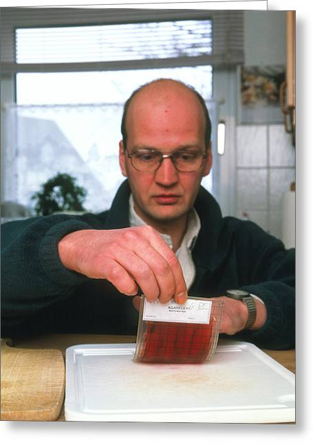 Bacteriology Greeting Cards - Testing For Bacteria Greeting Card by Volker Steger