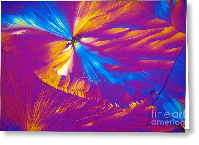 Transmitted Light Micrograph Greeting Cards - Testosterone, Polarized Micrograph Greeting Card by Michael W. Davidson
