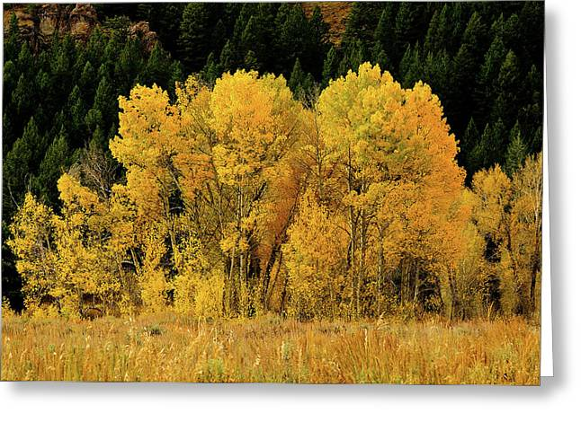 Teton Autumn Foliage Greeting Card by Greg Norrell