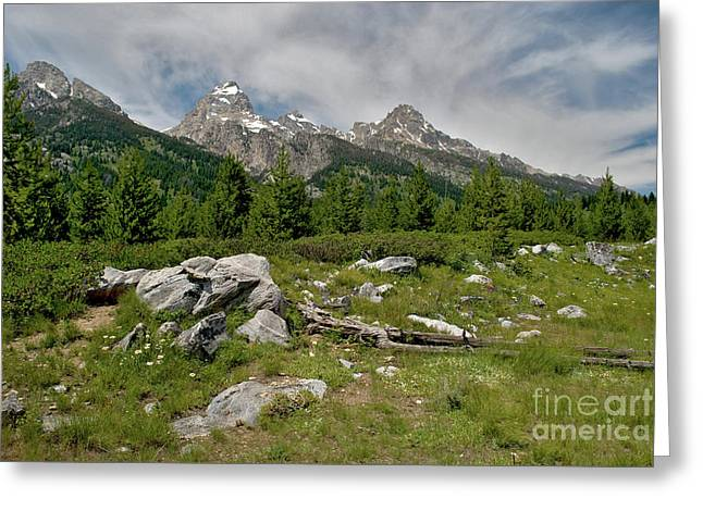 Pond Grand Tetons Greeting Cards - Teton Trail visit www.AngeliniPhoto.com for more Greeting Card by Mary Angelini