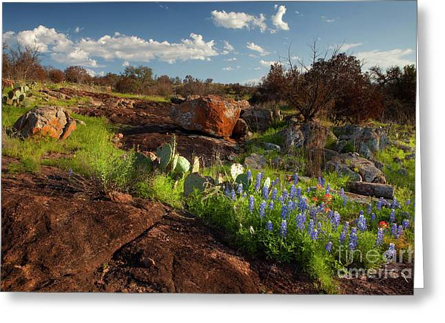 Blue Bonnet Greeting Cards - Texas Blue Bonnets and cactus Greeting Card by Keith Kapple