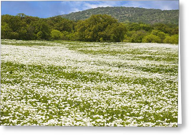 Country Pictures Greeting Cards - Texas Hill Country Spring 2 Greeting Card by Paul Huchton