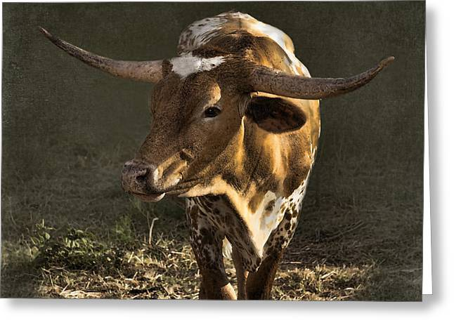 Bos Bos Digital Greeting Cards - Texas Longhorn # 4 Greeting Card by Betty LaRue