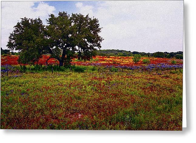 Texas Wildflowers Greeting Card by Tamyra Ayles