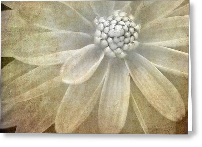 textured dahlia Greeting Card by Meirion Matthias