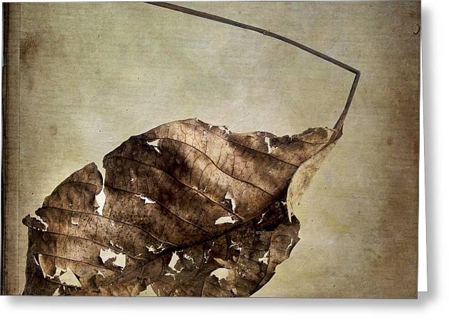 One Object Greeting Cards - Textured leaf Greeting Card by Bernard Jaubert