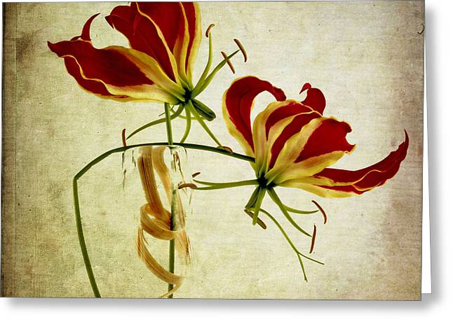Blooms Greeting Cards - Textured Gloriosa Lily. Greeting Card by Bernard Jaubert