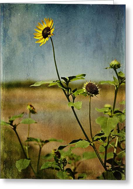 Textured Sunflower Greeting Card by Melany Sarafis