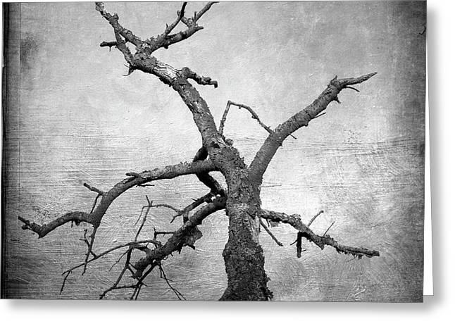 Bare Trees Digital Art Greeting Cards - Textured tree Greeting Card by Bernard Jaubert