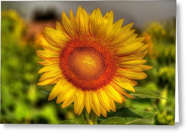 Stamen Digital Greeting Cards - Thai Sunflower Greeting Card by Adrian Evans