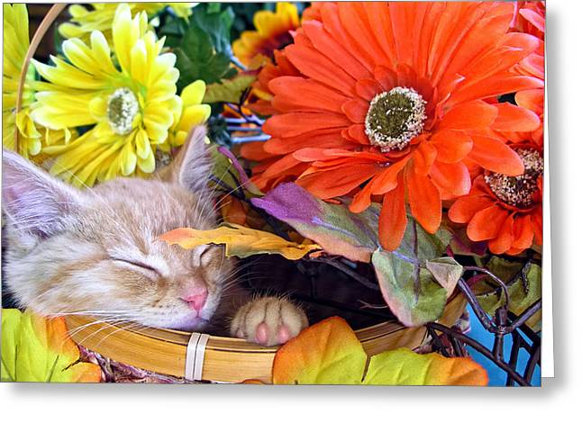 Kitteh Greeting Cards - Thanksgiving Kitten Asleep in a Gerbera Daisy Basket - Kitty Cat in Fall Autumn Season Colours  Greeting Card by Chantal PhotoPix