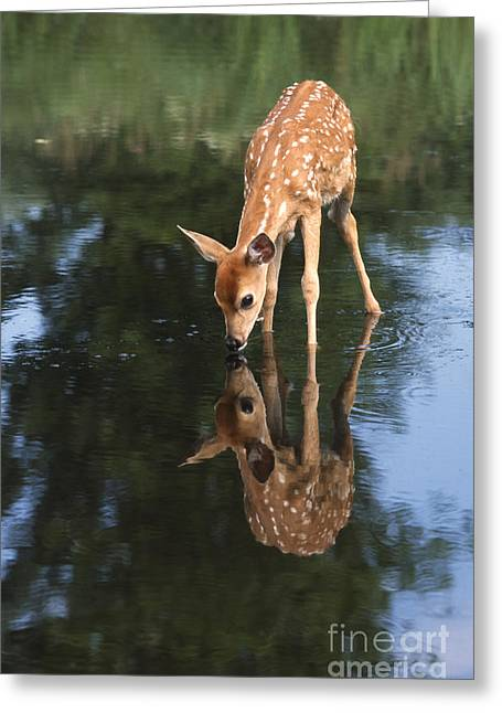 Tail Photographs Greeting Cards - That Must Be Me Greeting Card by Sandra Bronstein