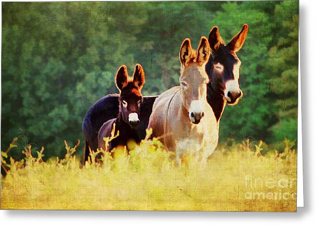Horse Images Greeting Cards - The A Family Greeting Card by Darren Fisher