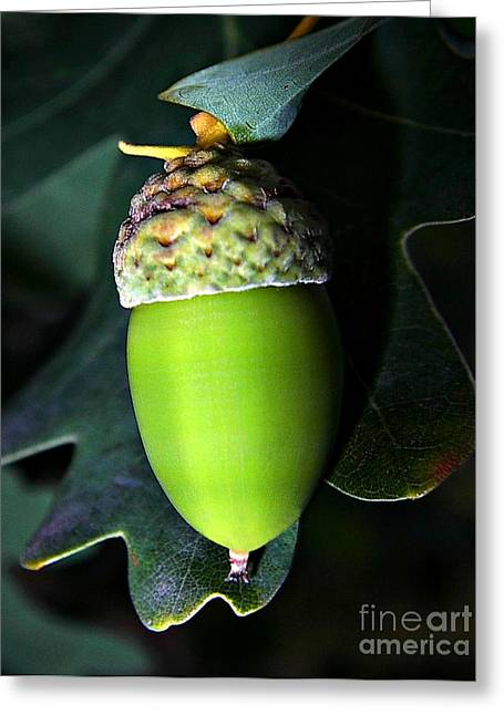 Grow Pyrography Greeting Cards - The acorn Greeting Card by Odon Czintos