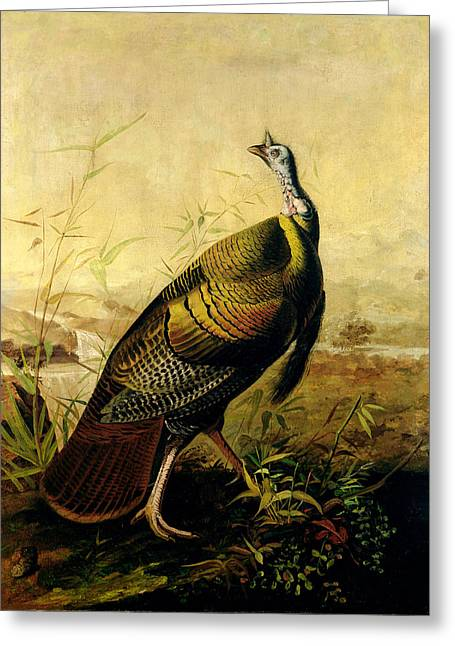 James Paintings Greeting Cards - The American Wild Turkey Cock Greeting Card by John James Audubon
