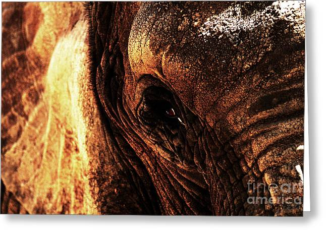 Elephants Eye Greeting Cards - The Ancient One Watches Greeting Card by Wingsdomain Art and Photography