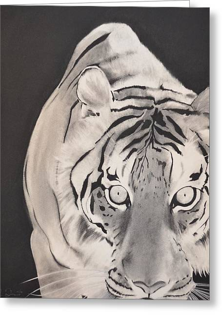 The Tiger Drawings Greeting Cards - The Approach Greeting Card by Daniel Torres