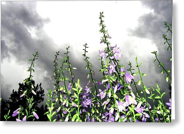 Blustery Greeting Cards - The Approaching Storm Greeting Card by Will Borden