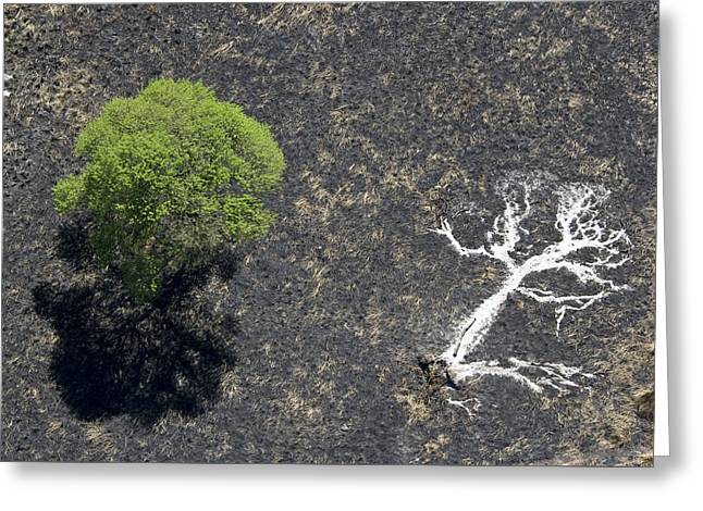 The Ashes Of A Burned Tree And A Live Greeting Card by Michael Poliza