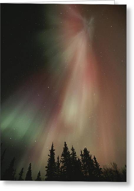 Northwest Territories Greeting Cards - The Aurora Borealis Illuminates The Sky Greeting Card by Paul Nicklen