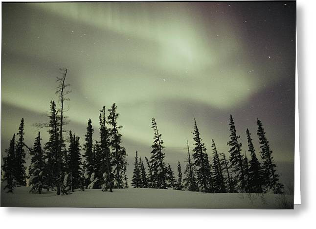 Snow And Night Sky Greeting Cards - The Aurora Borealis Shimmers In The Sky Greeting Card by Norbert Rosing