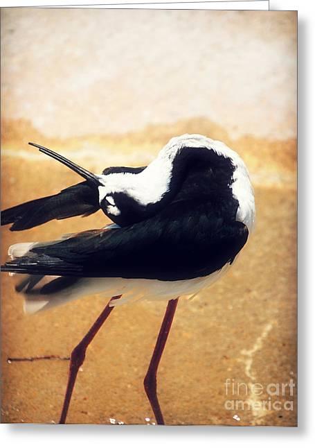 The Ballerina Bird Greeting Card by Peggy  Franz
