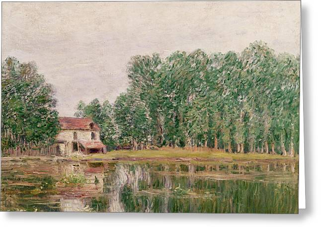 The Trees Greeting Cards - The Banks of the Canal at Moret Sur Loing Greeting Card by Alfred Sisley