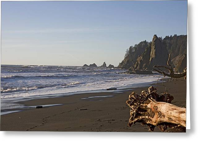Angeles Forest Greeting Cards - The Beach In Olympic National Park Greeting Card by Taylor S. Kennedy