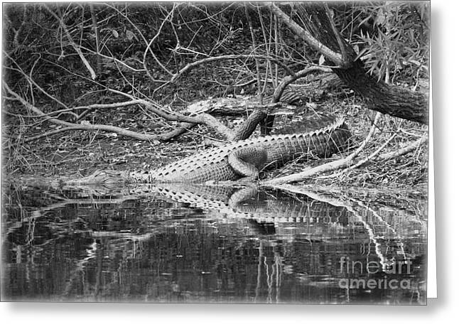 Florida Gators Photographs Greeting Cards - The Beast that Lives under the Bridge Greeting Card by Carol Groenen