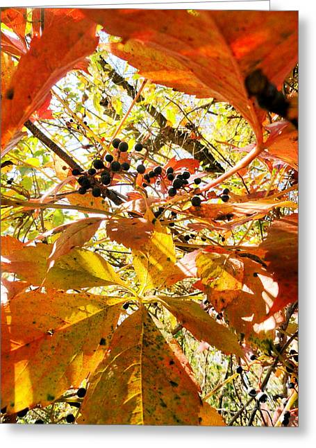 The Beauty In Dying Greeting Card by Trish Hale