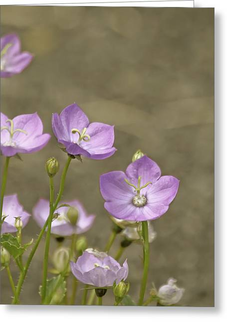 Flora Photographs Greeting Cards - The Beauty Of Greeting Card by Kim Hojnacki