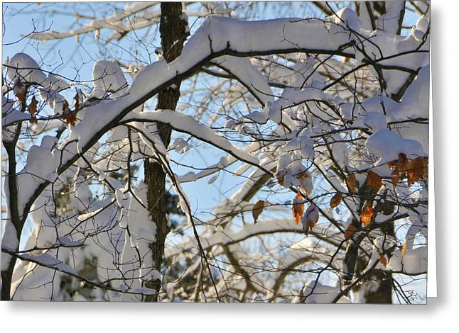 Large Poster Greeting Cards - The Beauty of Winter Greeting Card by Gerlinde Keating - Keating Associates Inc
