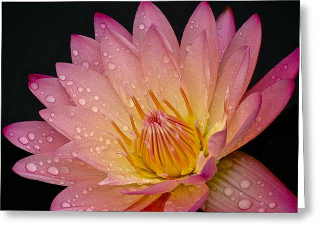 Stimulating Colored Flower Greeting Cards - The Beauty On Rainy Days Greeting Card by Debra     Vatalaro