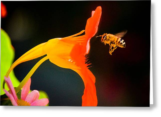 The Bee Greeting Card by Mickey Clausen