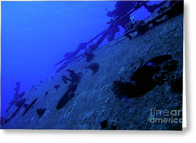 Underwater.saltwater Greeting Cards - The Belama Shipwreck Greeting Card by Sami Sarkis
