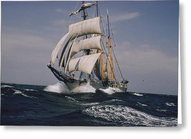 Wind In The Sails Greeting Cards - The Belgian School Ship Mercator Greeting Card by J. Baylor Roberts
