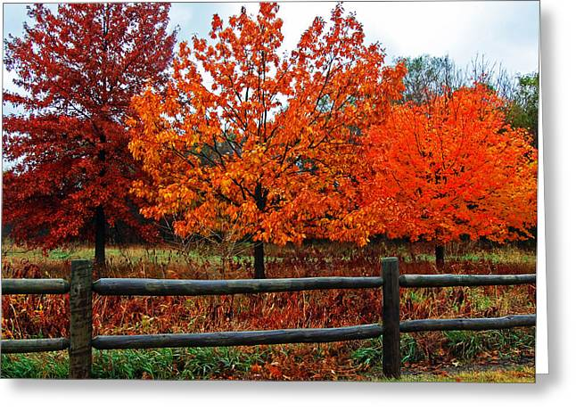Randall Templeton Greeting Cards - The best of fall. Greeting Card by Randall Templeton