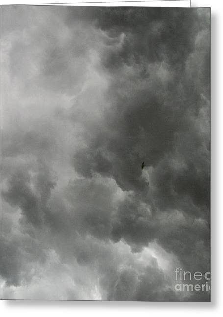 Storm Prints Greeting Cards - The Bird Knows It Is Coming Greeting Card by Marsha Heiken