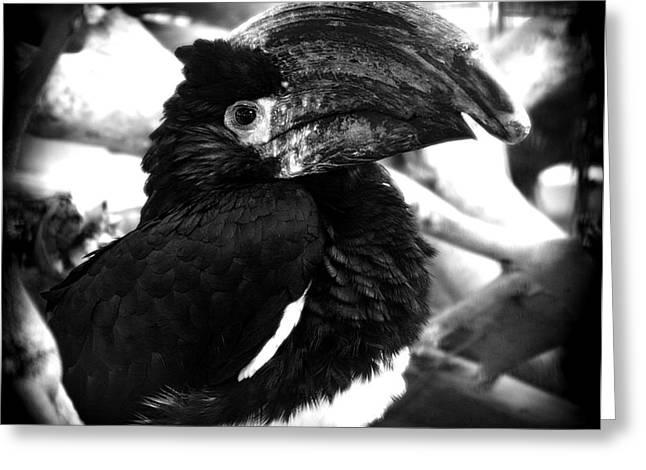 Flying Pyrography Greeting Cards - The bird Greeting Card by Radoslav Nedelchev