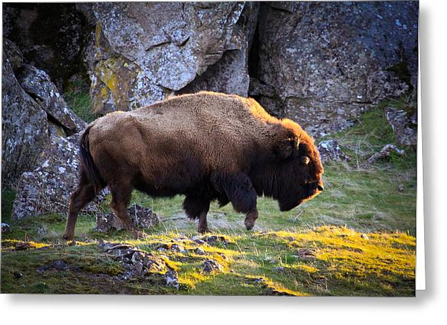 Award Winning Art Greeting Cards - The Bison Greeting Card by Steve McKinzie