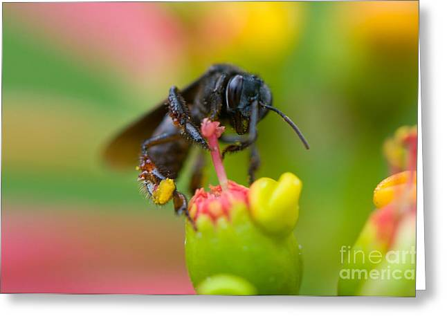 Thin Greeting Cards - The Black Bee Greeting Card by Cesar Marino