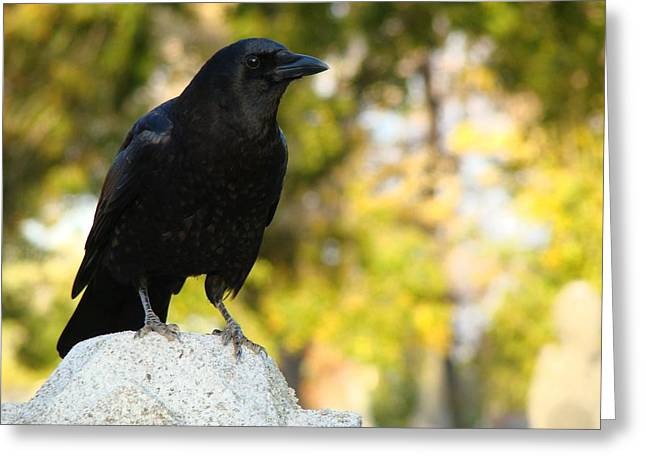 Crows In Autumn Greeting Cards - The Blackbird Greeting Card by Gothicolors Donna Snyder