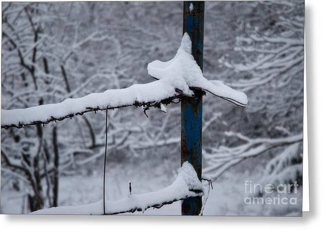 Wire Tree Greeting Cards - The Blue Fence Post Greeting Card by Fred Lassmann