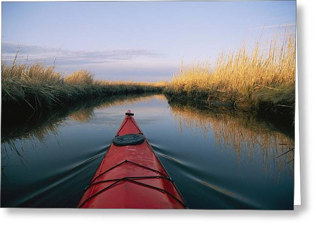 Chesapeake Bay Greeting Cards - The Bow Of A Kayak Points The Way Greeting Card by Skip Brown