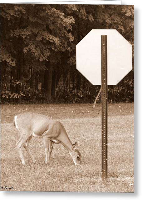 Indiana Landscapes Digital Art Greeting Cards - The Buck Might Stop Here Greeting Card by Ed Smith