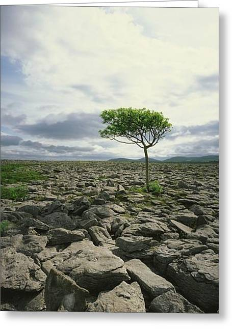 Collection Of Rocks Greeting Cards - The Burren, On Kinvara Side, Co Clare Greeting Card by The Irish Image Collection