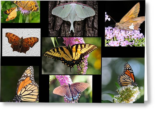 Luna Greeting Cards - The Butterfly Collection Greeting Card by Paul Ward