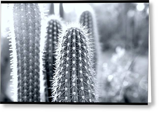 Desert Greeting Cards - The Cacti Family Greeting Card by Courtney Lively